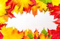 与五颜六色的marple的秋天框架在白色木backgro离开 免版税图库摄影