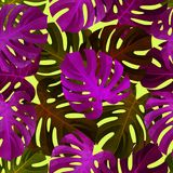 与五颜六色的monstera叶子的热带无缝的样式 时兴的背景 图库摄影