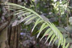 与亚马孙河盆地雨林植物群的被弄脏的自然背景在南美洲 免版税库存图片