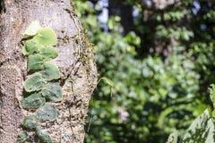 与亚马孙河盆地雨林植物群的被弄脏的自然背景在南美洲 免版税库存照片