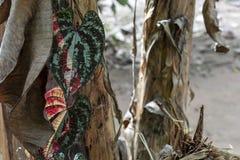 与亚马孙河盆地雨林植物群的被弄脏的自然背景在南美洲 图库摄影