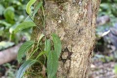 与亚马孙河盆地雨林植物群的被弄脏的自然背景在南美洲 库存照片