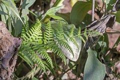 与亚马孙河盆地雨林植物群的被弄脏的自然背景在南美洲 免版税图库摄影