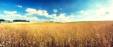 与亚麻籽领域的农业风景 背景蓝色云彩调遣草绿色本质天空空白小束 免版税库存照片
