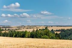 与亩茬地和树的夏天农村风景 免版税库存照片