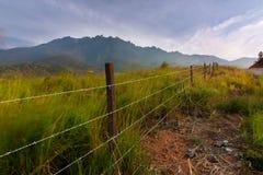 与京那巴鲁山的草地背景的在Kundasang,沙巴,东马来西亚 免版税库存图片