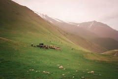与人和马的山风景 免版税库存照片