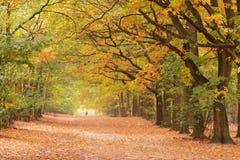 与人的晴朗的autumnlane 免版税库存照片
