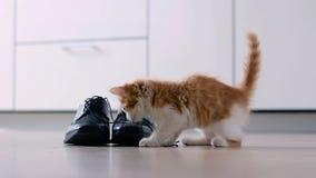 与人` s鞋子的小猫戏剧 影视素材