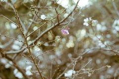 与仅少量花的一棵大胆的树离开在晚秋天期间在普遍的代代木公园,东京,日本 库存图片