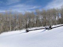 与仅有的冬天白杨木的冬日 免版税库存照片