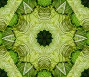与从嫩卷心菜得到的几何万花筒设计的抽象背景朝向在农夫` s市场上 皇族释放例证