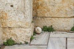 与他的头的困pidgeon在废墟的角落卷起了站立在大理石在有粗砺的古老石头的帕台农神庙附近 免版税图库摄影