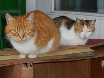 与他的女朋友的野猫 免版税库存图片