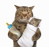 与他的小猫的猫 图库摄影