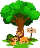 与他逗人喜爱的儿子的狮子 免版税图库摄影