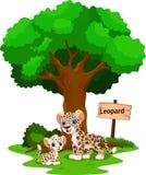 与他逗人喜爱的儿子的豹子 免版税图库摄影