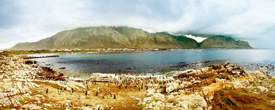 与企鹅的全景横向 库存图片