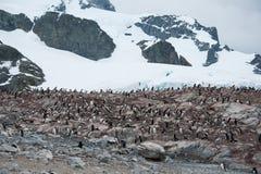 与企鹅的多岩石的海滩在南极洲 免版税库存图片