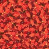 与伏牛花明亮的多彩多姿的叶子的无缝的背景  免版税库存照片