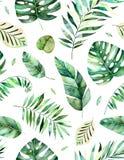 与优质手画水彩热带叶子的无缝的样式 皇族释放例证
