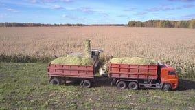 与会集玉米大量的卡车驱动的接近的看法收割机 影视素材