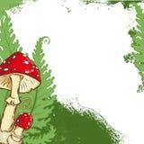 与伞形毒蕈蘑菇框架和蕨叶子的背景 免版税库存照片