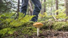 与伞形毒蕈muscaria的蘑菇猎人 免版税图库摄影