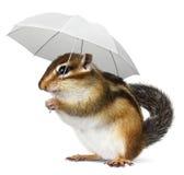 与伞的滑稽的动物在白色 图库摄影