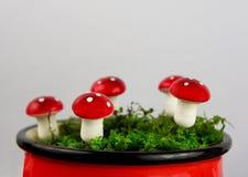 与伞菌和青苔的童话背景 库存图片