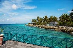与伟大的棕榈的白色沙子在海滩 免版税库存照片