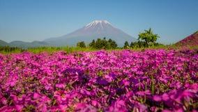 与佐仓桃红色青苔的领域的日本Shibazakura节日  图库摄影