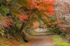 与佐仓的秋天背景红色事假在Obara名古屋日本 免版税库存照片