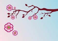 与佐仓的花卉背景 库存图片