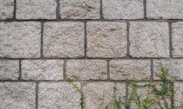 与作为Termplate使用的叶子的难看的东西石砖墙样式 免版税库存照片