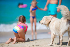 与使用在海滩的浅水区的金毛猎犬的家庭 免版税库存图片