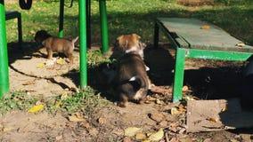 与使用战斗的无家可归的小狗外面 影视素材