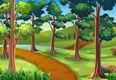 与供徒步旅行的小道的场面在森林 库存照片