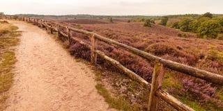 与供徒步旅行的小道的开花的欧石南丛生的荒野 库存照片