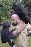 与倭黑猩猩的人戏剧 倭黑猩猩(平底锅paniscus) 免版税库存照片