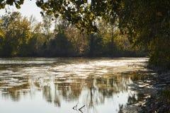 与倾斜在湖的树的美好的秋天风景在五颜六色的日落期间 免版税库存图片
