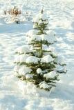 与假日新年和圣诞节杉树的冬天风景 库存照片