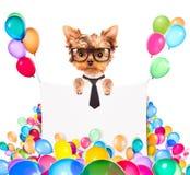 与假日横幅和五颜六色的气球的狗 库存照片