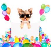 与假日横幅和五颜六色的气球的狗 图库摄影