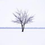与偏僻的结构树的冬天横向在薄雾 免版税库存照片