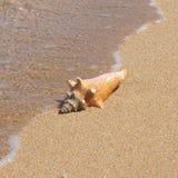 与偏僻的贝壳的海滩 库存图片