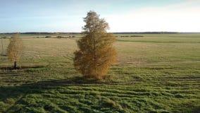 与偏僻的黄色树的鸟瞰图无边的绿色领域 股票录像