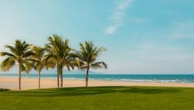 与偏僻的可可椰子树的日落 库存照片