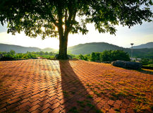 与偏僻的树剪影的不可思议的日出在太阳的开放领域 免版税库存图片