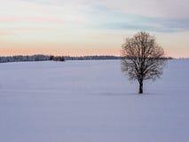 与偏僻的树和雪原的冬天风景 免版税图库摄影
